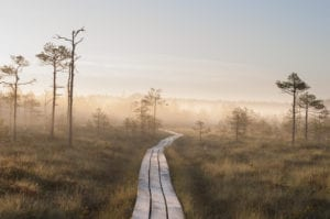Sunrise Bog